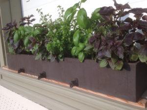 neues Keramikpflanzengefäss für Basilikum, ch-keramik.ch